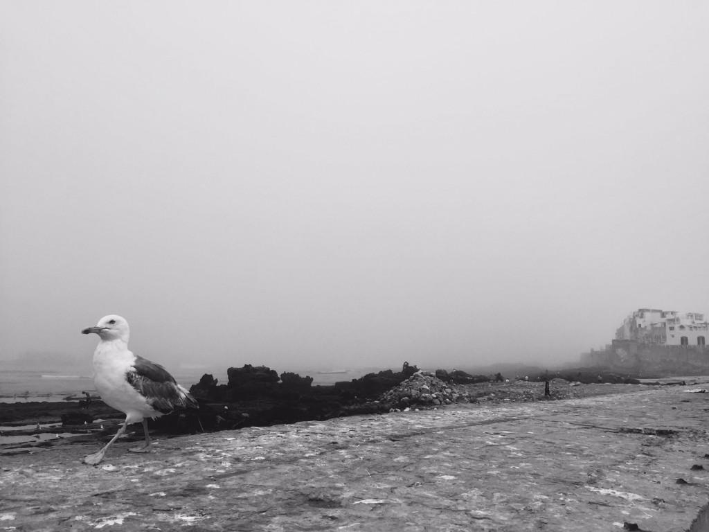 Journal d 39 un pigeon voyageur essaouira la perle de la for Briser un miroir signification